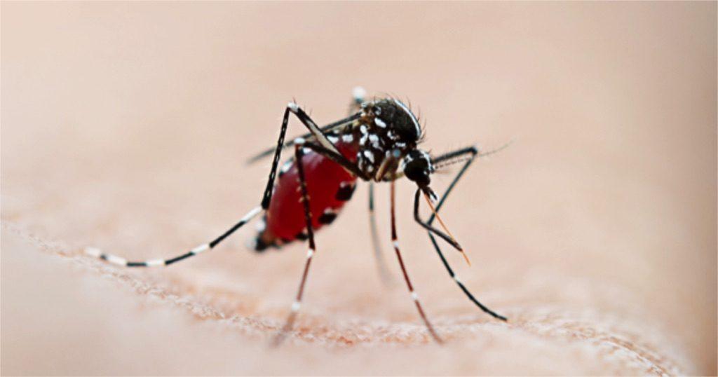Cerebral Malaria, Kenya